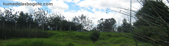 Humedal Capellania